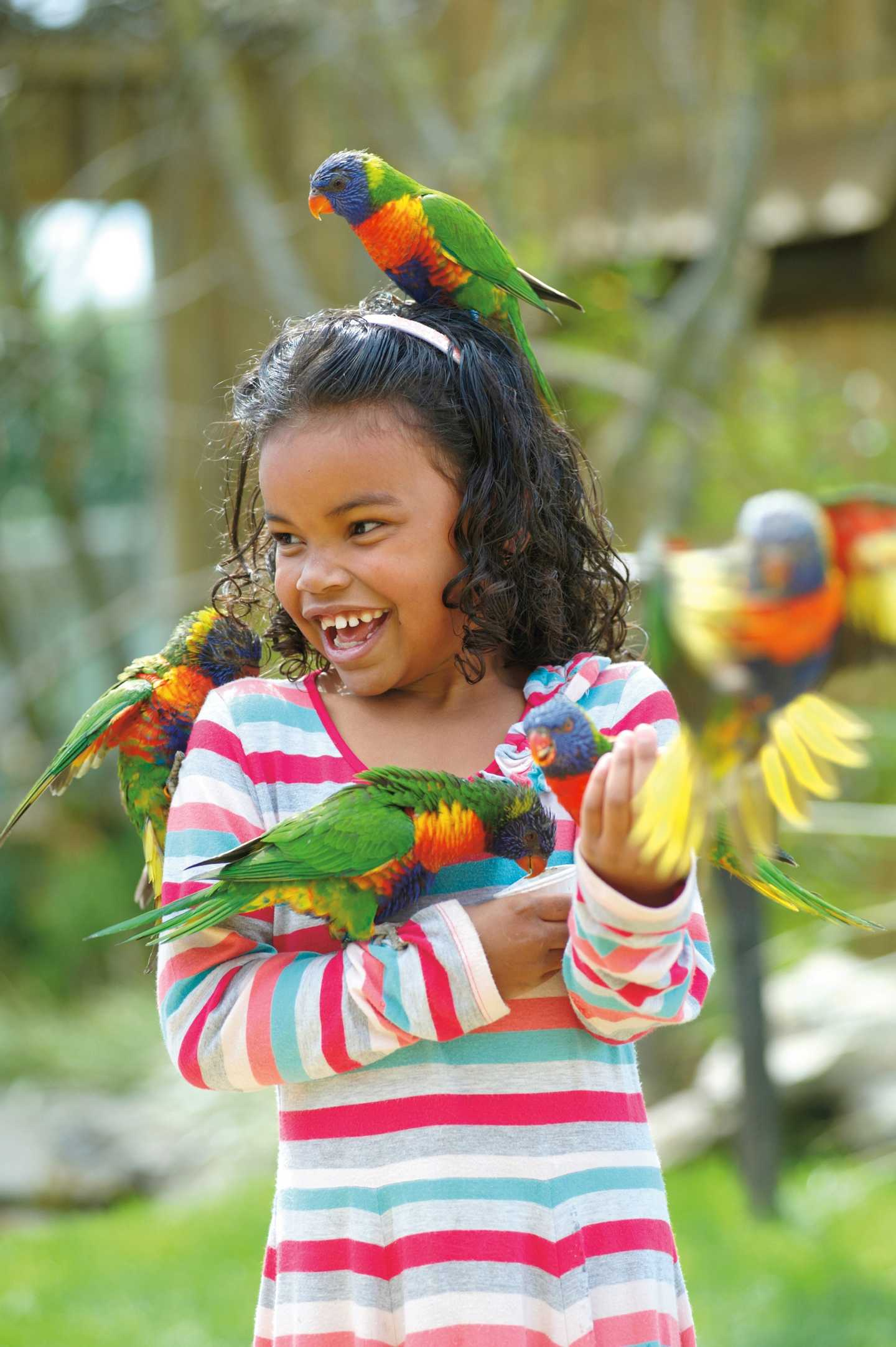 Girl and five colouful parrots