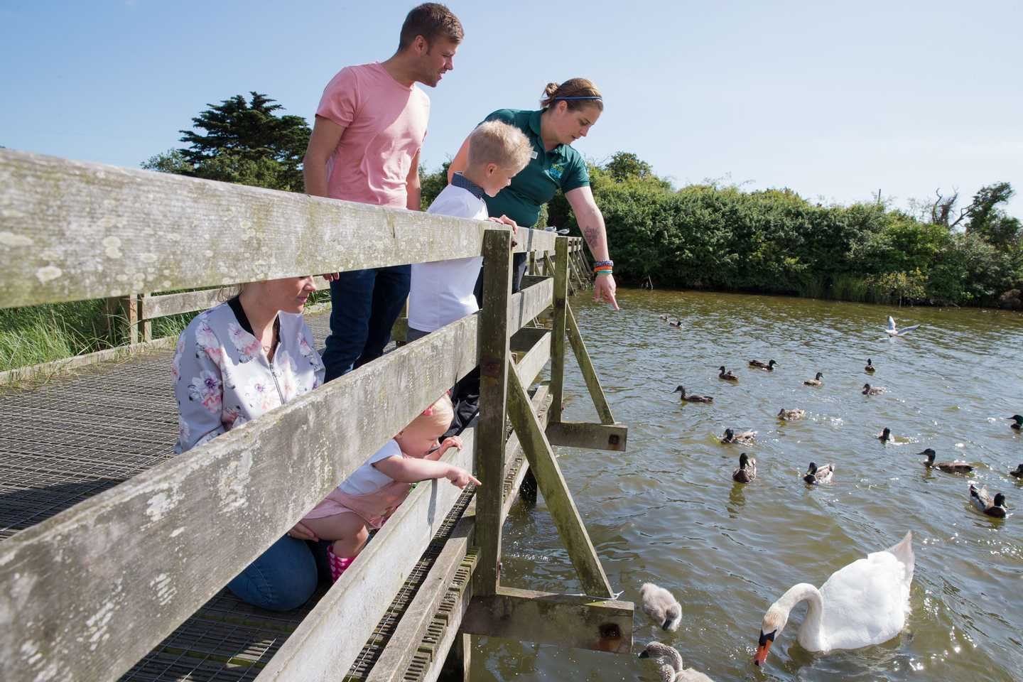 Guests feeding the ducks