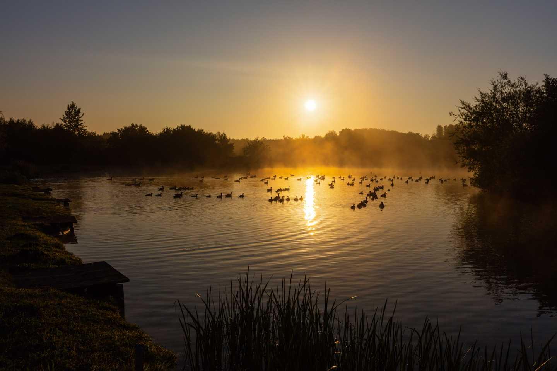 Ducks swimming in the fishing lake at sunrise