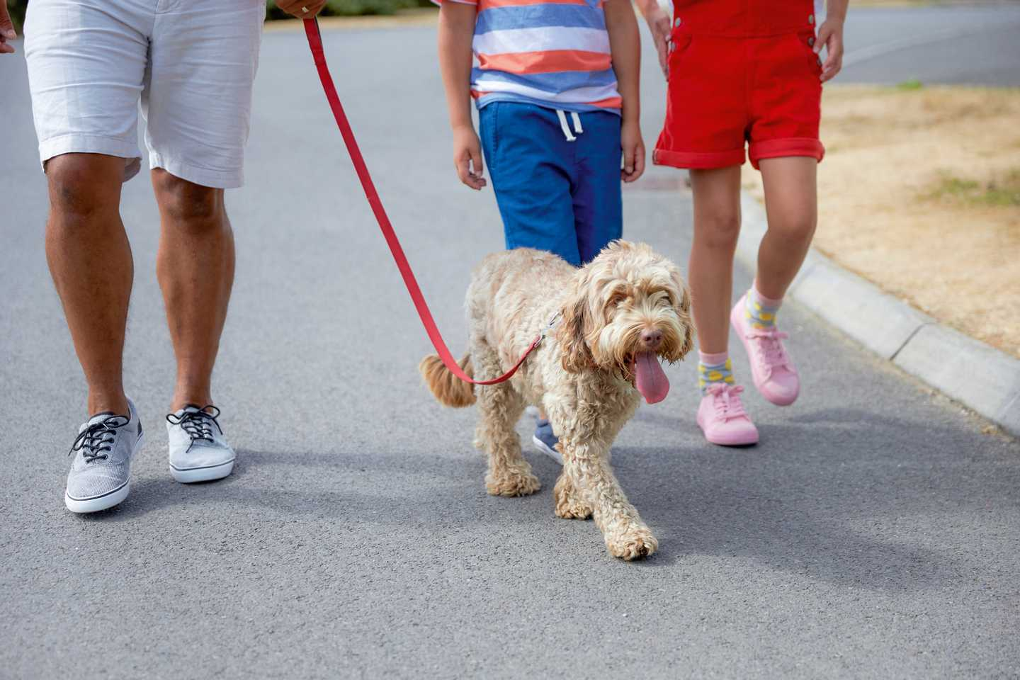 Children walking their dog around Littlesea Holiday Park