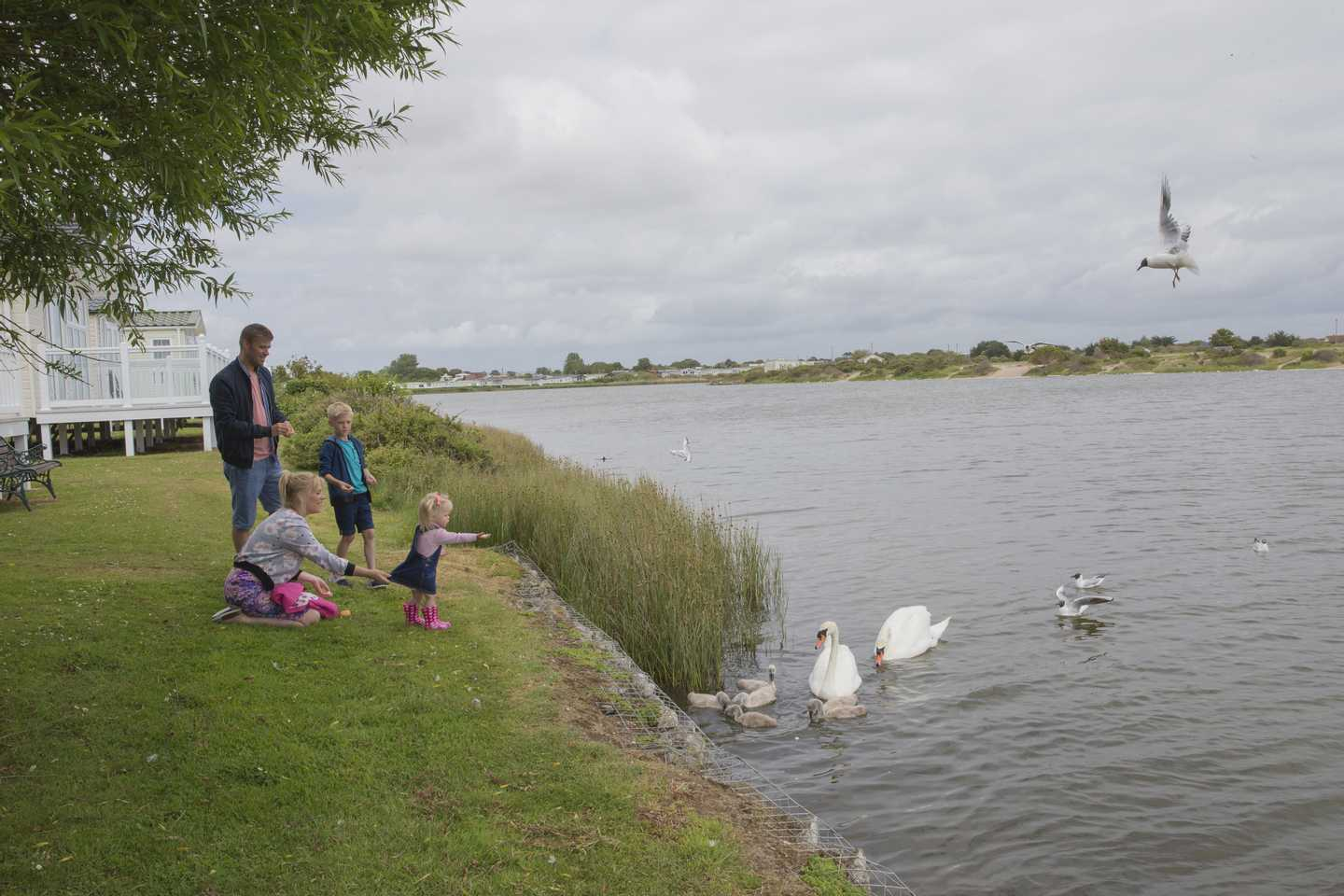 A family feeding the swans on the Lagoon