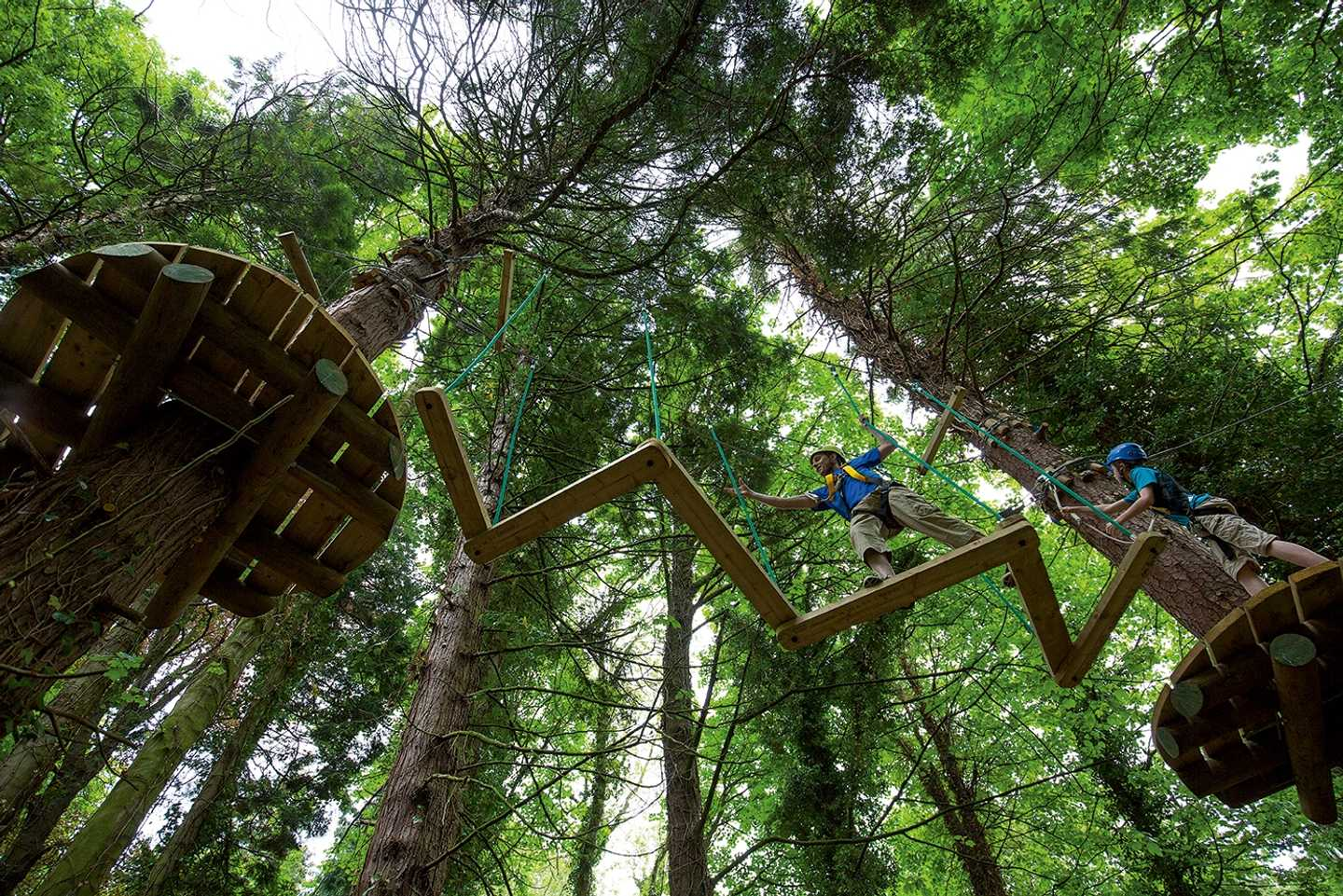 The aerial adventure course in the trees