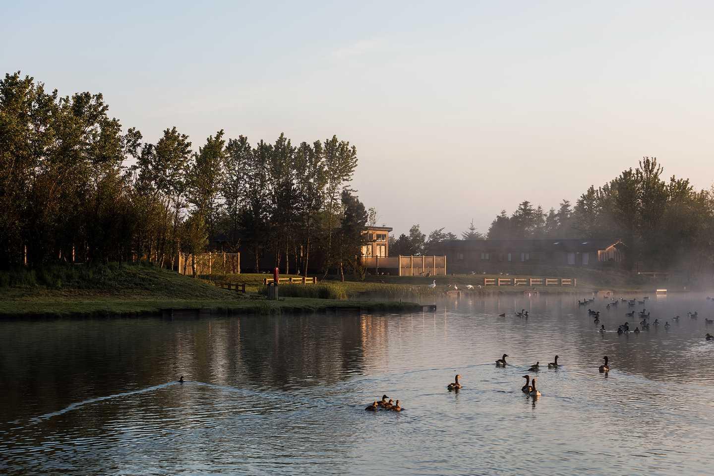 Ducks on the lake during dusk at Far Grange