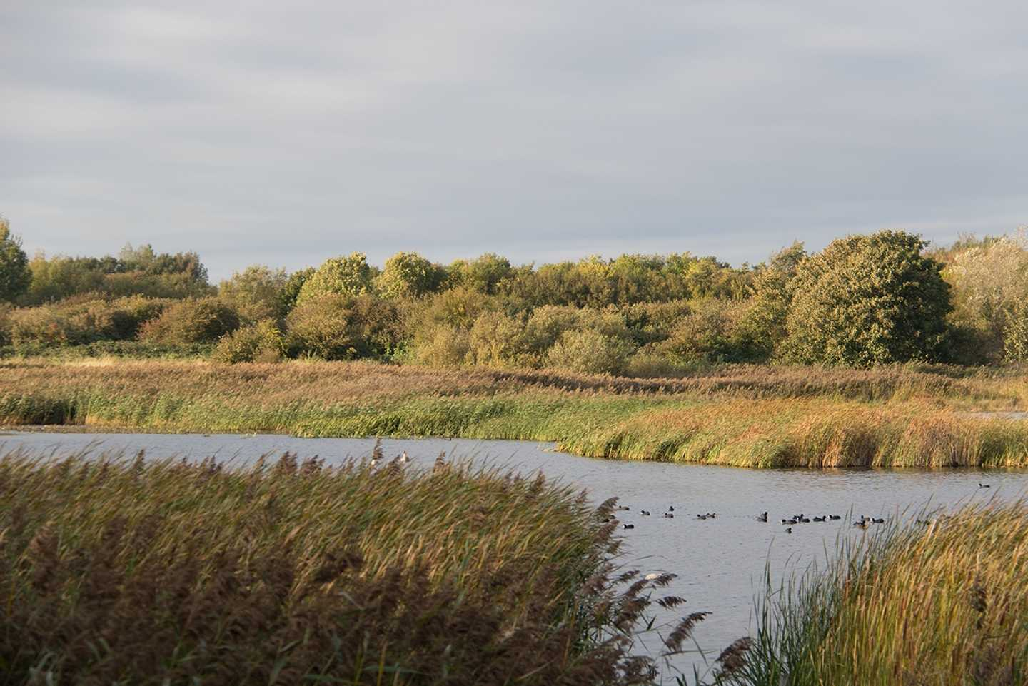 The view of Marton Mere
