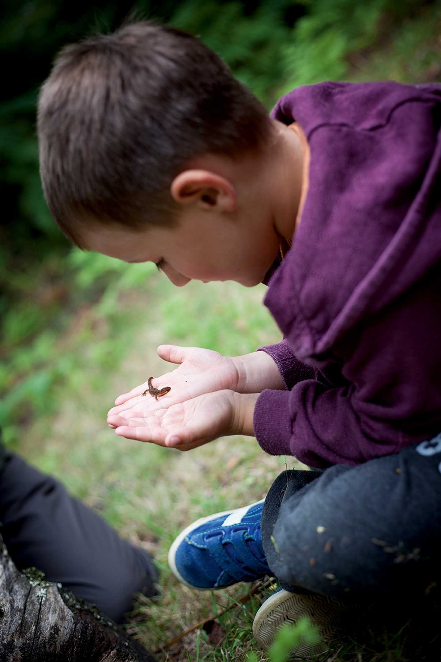 Child looking at bugs