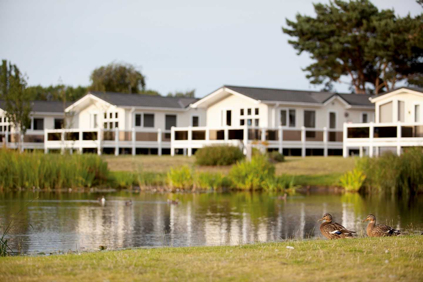 A view of some of our caravans with verandas backing onto the lake