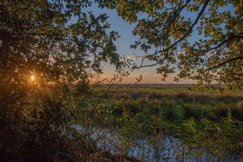 Sunset at Wild Duck