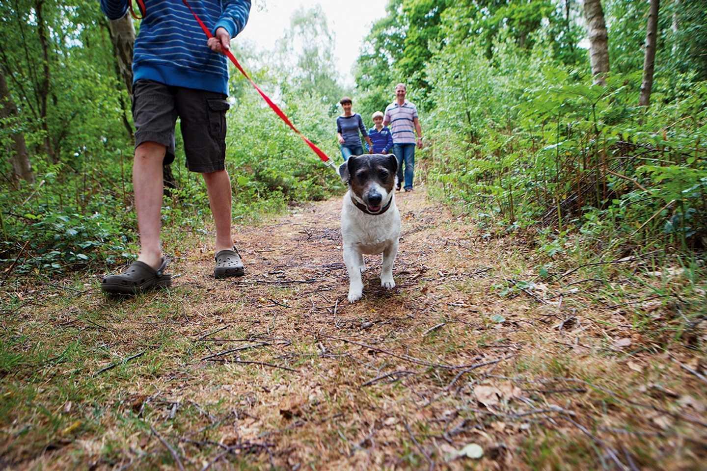 Dog walking through the woodlands at Wild Duck