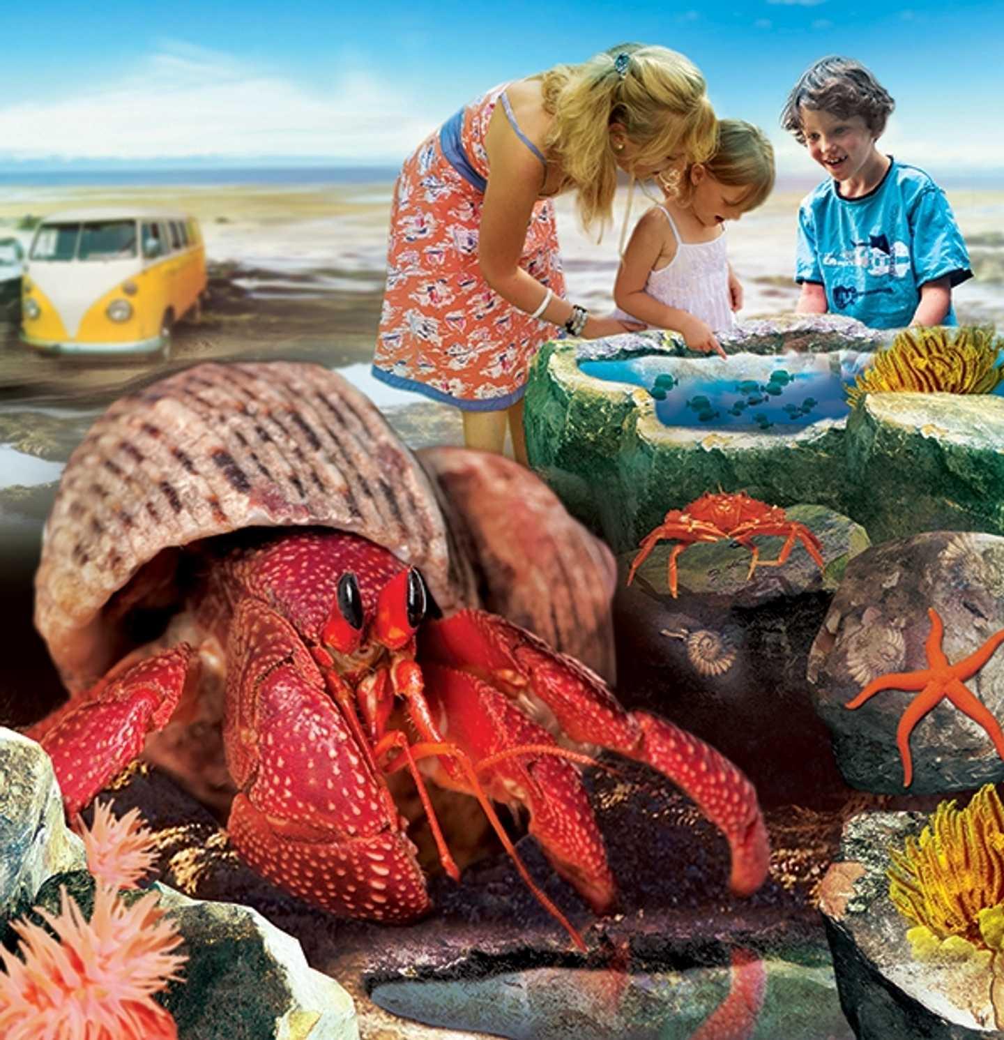 Anglesea Sea Zoo