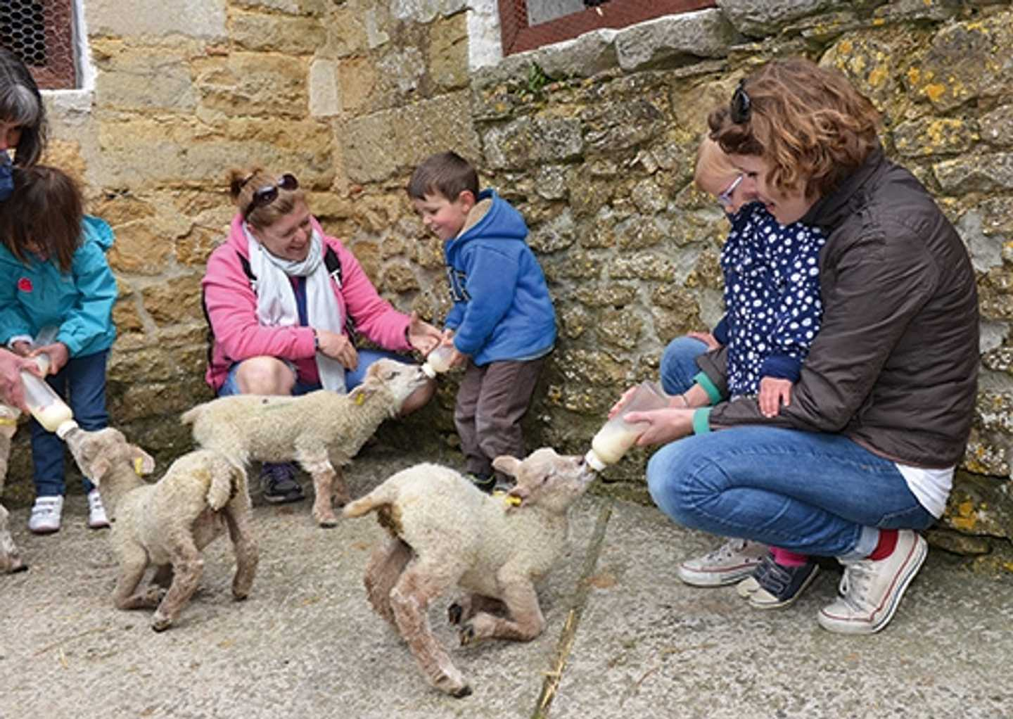 Visitors bottle feeding lambs