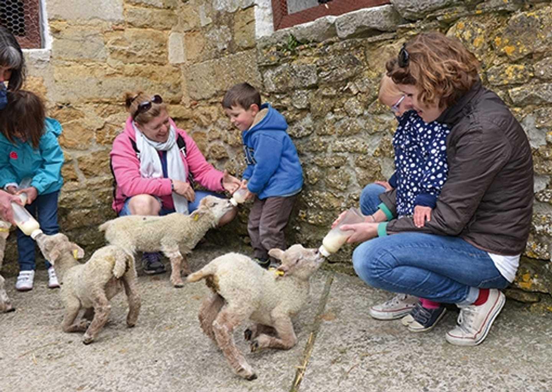 Visitors bottle feeding lambs
