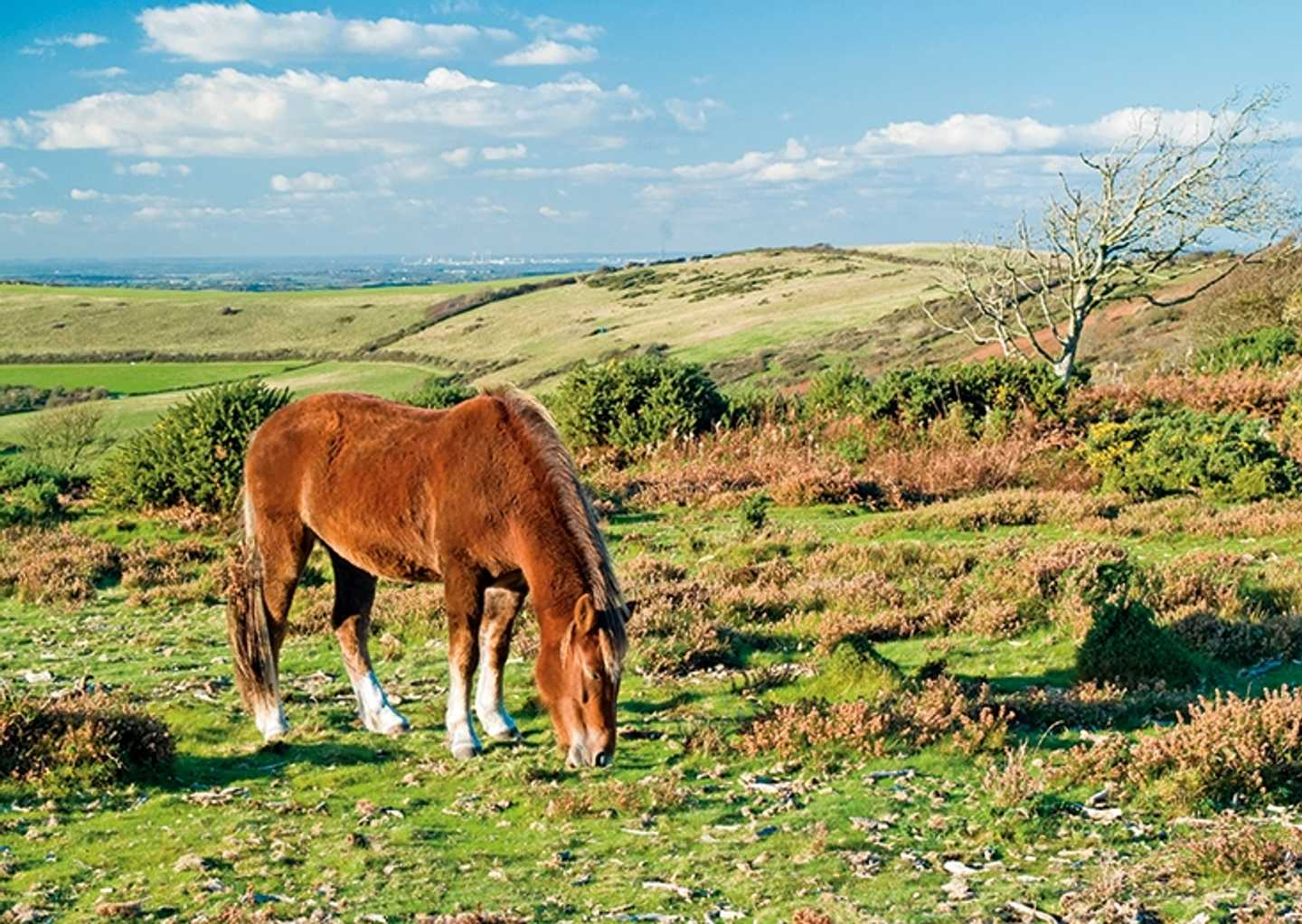 A horse grazing in the field of the New Forest