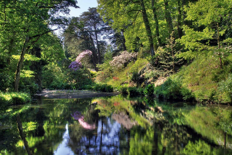 Trees overlooking the river Bodnant Garden