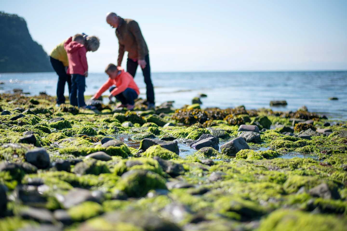 Family looking in rock pools