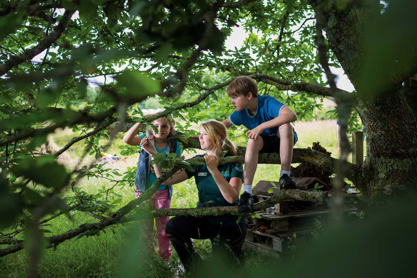 Nature Rockz activities in the woodland at Greenacres