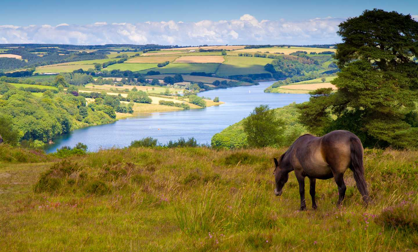 A horse grazing in the field of Exmoor National Park