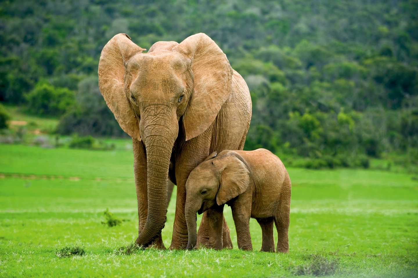 An elephant and her calf in the park